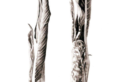 Ink shoots - Arisaema serratum