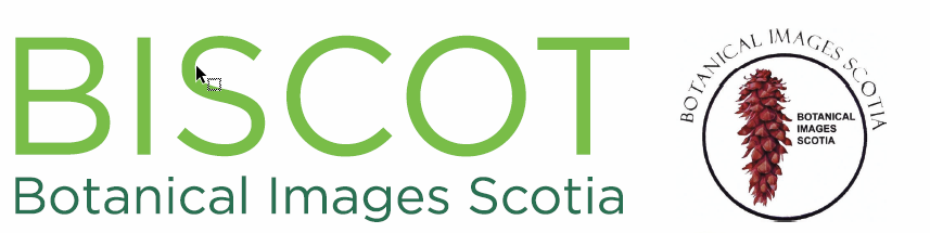 Botanical Images Scotia BISCOT 2019